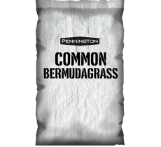 common_bermudagrass_600x600