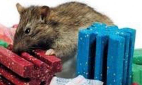 rodenticidas-ratas